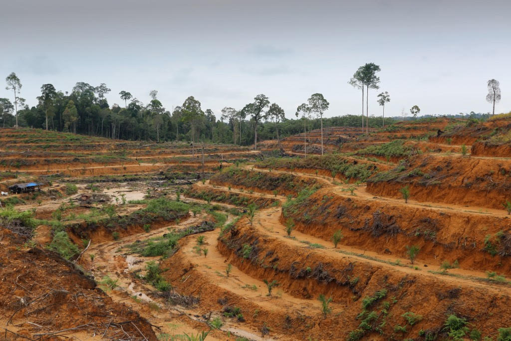 indonesia deforestation Palm oil is literally everywhere palm oil – deforestation for everyday products read more about us in indonesia, more than 700 land.
