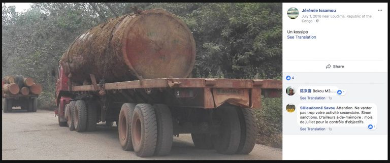 Oil palm, rubber could trigger 'storm' of deforestation in