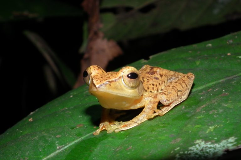 Photo-3-Red-Legged-Frog