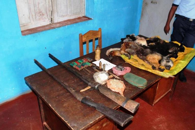 Confiscated weapons and some of the poached lemurs. Photo courtesy of Vahinala Radio Andasibe.