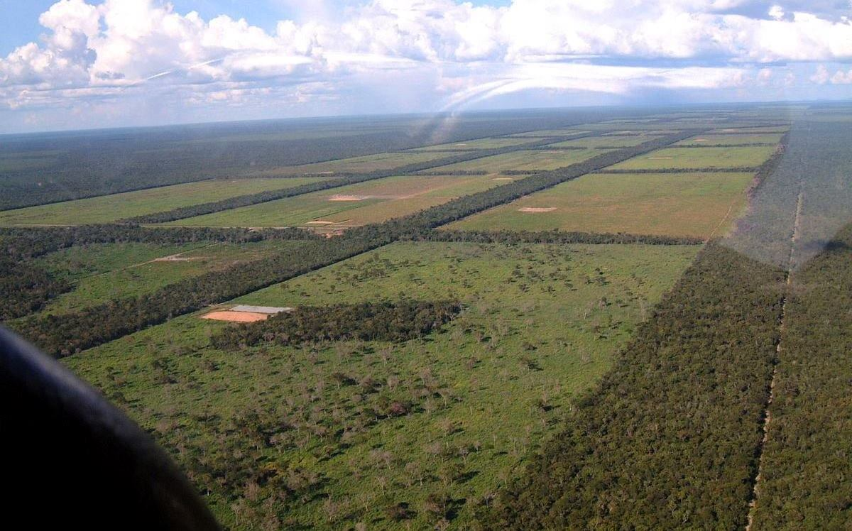 Expansive clearings for cattle grazing in the Pargauayan Gran Chaco are visible from above.