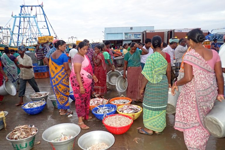 Women sell fish in Karaikal, Tamil Nadu, India. Women are commonly charged with sorting and selling the catch, particularly the low-value species. Trawlers don't target any particular species and their catch includes many forms of marine life. Photo by Amanda Vincent/Project Seahorse.