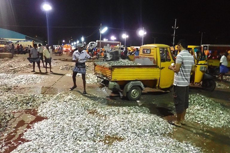 Undifferentiated catch arrives from the trawl boats in Tuticorin, Tamil Nadu, India. Workers shovel it onto trucks and take it away, often to be processed into chicken feed. Photo by Amanda Vincent/Project Seahorse.