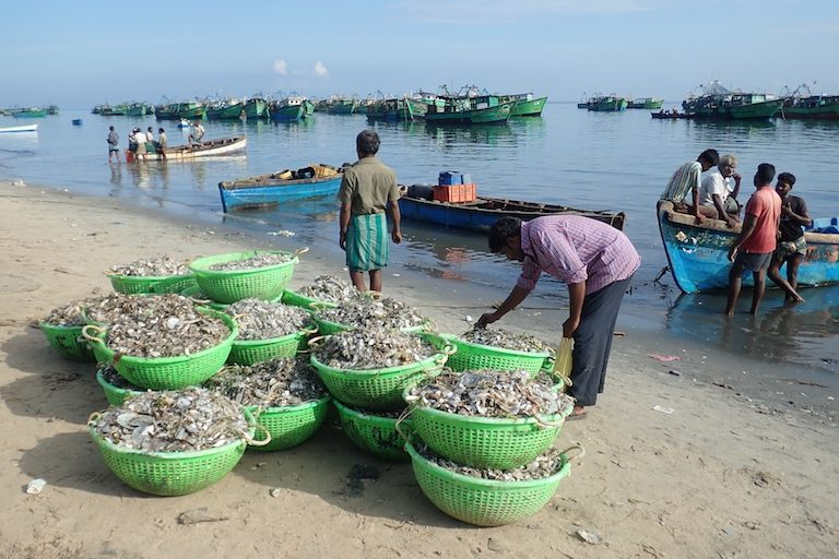 Undifferentiated catch is brought ashore from a fleet of fishing boats in Mandapam, Tamil Nadu, India. Photo by Amanda Vincent/Project Seahorse.