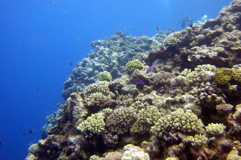 Osprey Reef is one of many reefs in Australia's Coral Sea Marine Park. It will retain full protection under the government's new plan. Photo by Matt Keiffer via Flickr.