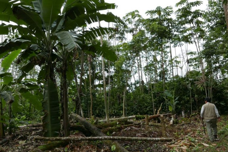 Deforestation affects forest concessions in Madre de Dios. Owners must deal with illegal logging. Photo by Jack Lo Lau/Mongabay.