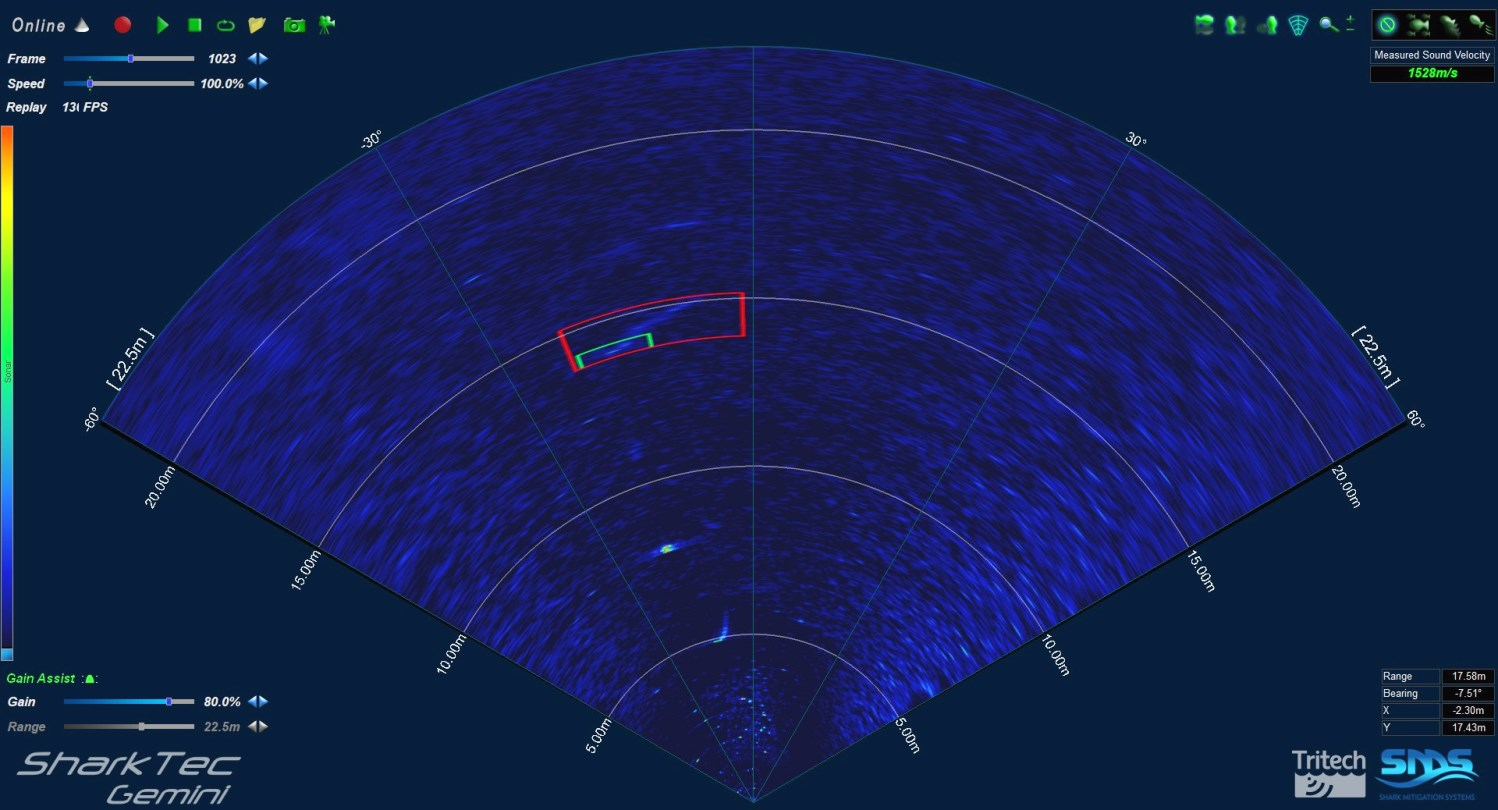 The SharkTec sonar capture of a tiger shark moving from right to left, based on its size and swim movement pattern. Tiger sharks are one of three species responsible for most attacks on humans.