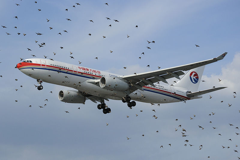 A bird flock does not respond as quickly as a plane in flight, such as this China Eastern plane near London's Heathrow airport.