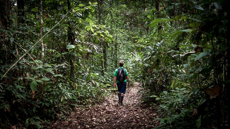 Robin Van Loon walks through the primary forest protected by Camino Verde. Photo courtesy Shahrzade Ehya.