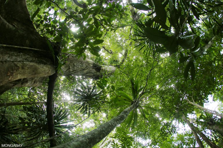 Rainforest on Madagascar's Masoala Peninsula. Photo by Rhett A. Butler for Mongabay.