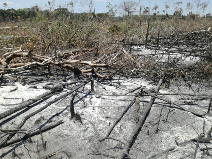 Jorge Suárez, a farm manager from the area, estimates that between November and January at least 4,000 hectares of forest have been cut down. The army, however, says that the number is 1,200. In April, the official numbers will be known. Photo by Jorge Suárez.