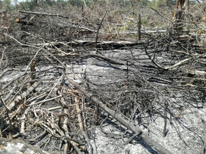 The damage that are appearing in the town of La Novia, a vast jungle to the east of San Vicente del Caguán, in the Caquetá Department. Photo by Jorge Suárez.