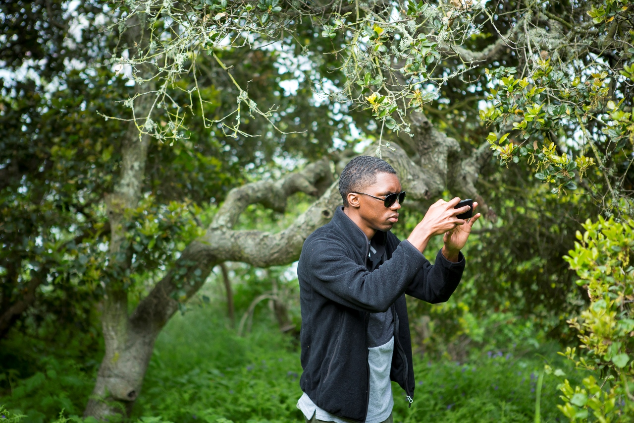 "A team member in a recent ""bioblitz"" on Yerba Buena Island in San Francisco Bay sharpens his focus to capture a new plant."