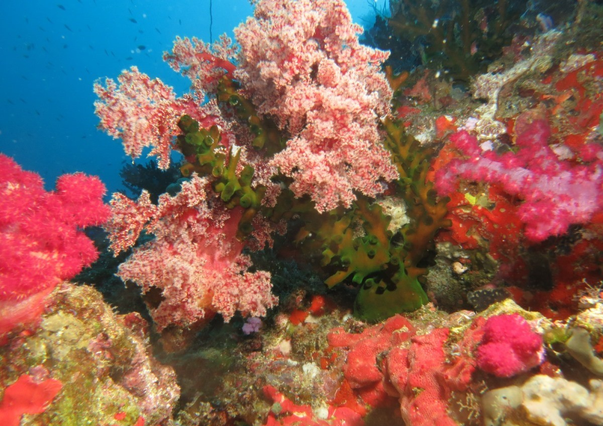 A healthy coral reef in Fiji. The Resource Watch platform maps coral reef locations, communities dependent on reefs, reef bleaching alerts, projected reef bleaching locations, and other reef-related data layers.