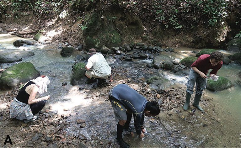 Citizen scientists on the first taxon expedition to Maliau Basin, Malaysian Borneo, performing microhabitat sampling. Courtesy of Freitag et al. (2018)