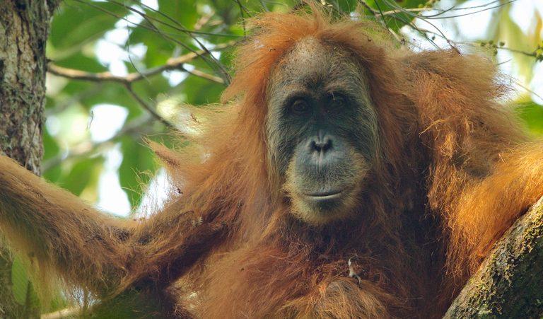 Conservation news on Development