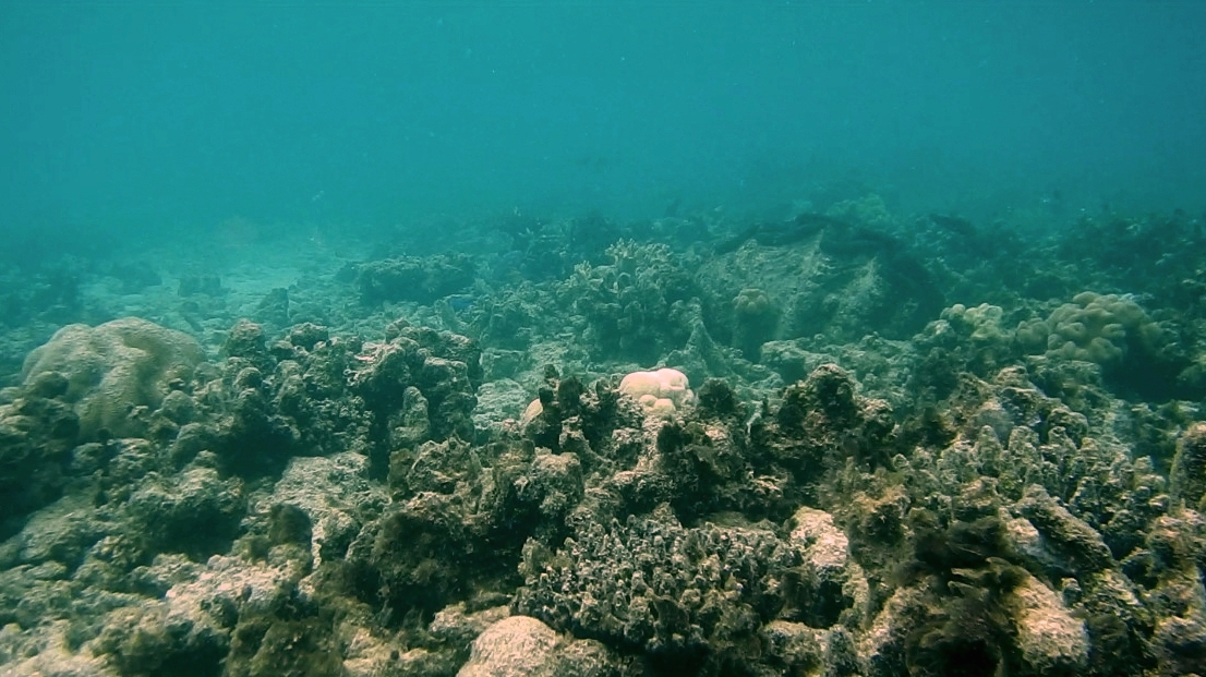 A second degraded reef coral reef at Lizard Island, Northern Great Barrier Reef, Australia. With few fish, degraded reefs lack the complex symphony of sounds of a healthy reef that attract young fish to a reef.