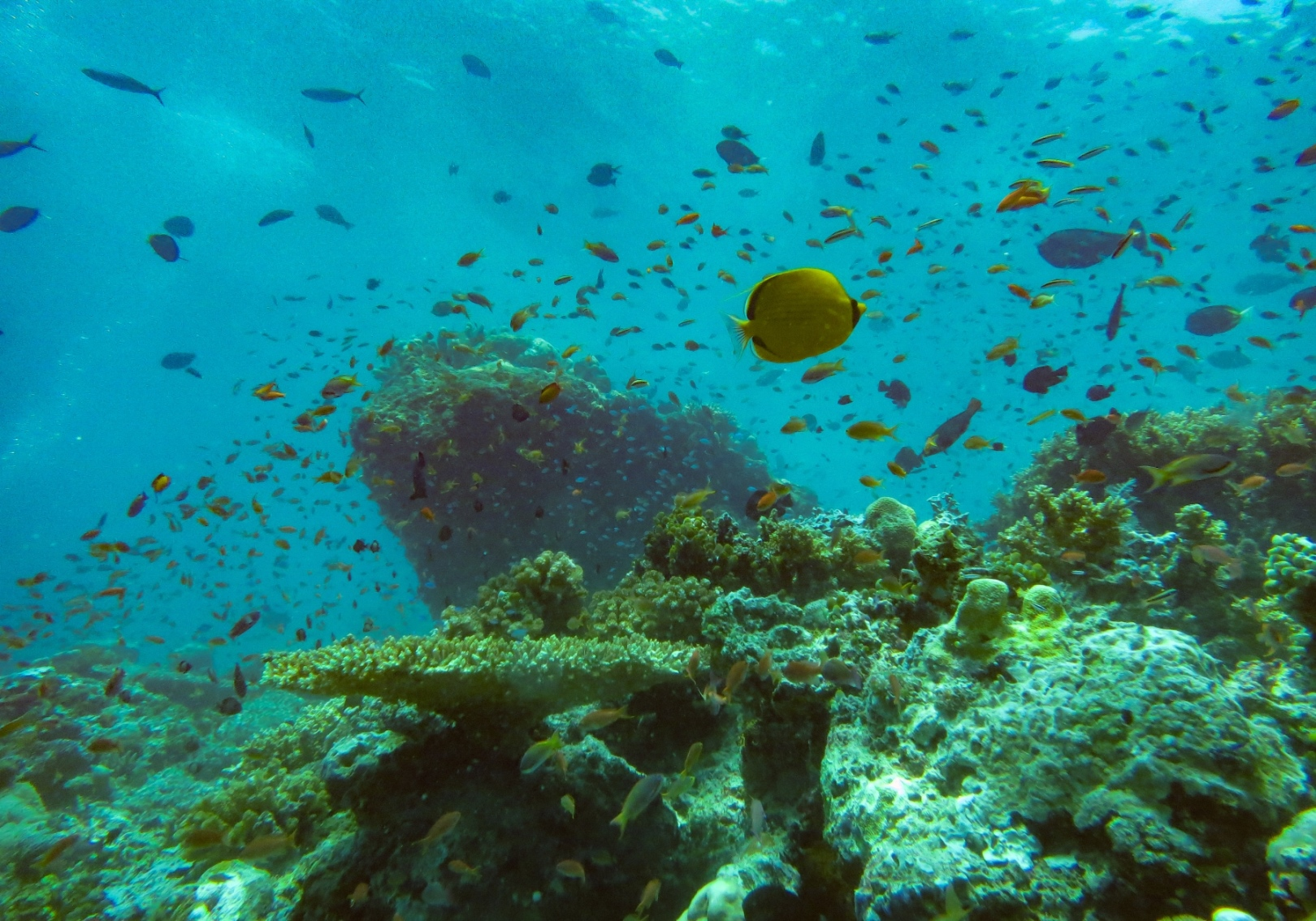A diversity of fish species on a coral reef in Sabah, Malaysia. A healthy coral reef supports many species of fish, as well sea turtles, soft corals, and invertebrates such as starfish, squid, and shrimp.