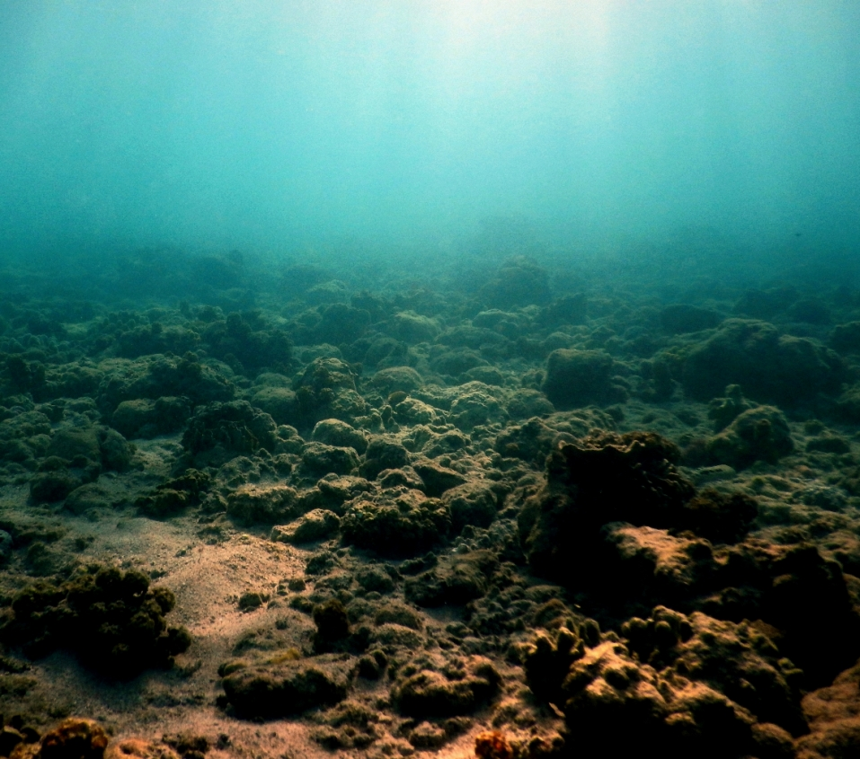 A degraded reef coral reef at Lizard Island, Northern Great Barrier Reef, Australia. The area was heavily degraded over the last five years by severe coral bleaching and tropical cyclones, both of which are increasing in frequency and severity worldwide as sea temperatures rise.