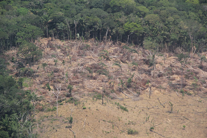 Guaviare Department, whose jungle connects the Amazon and the Orinoquía natural region, is one of the five departments in Colombia with the most deforestation. Photo courtesy of Semana Sostenible.