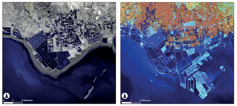Before (left) and after (right): coastal development associated with the creation of Caofeidian, a land reclamation project outside of Beijing, has led to extensive loss of intertidal mudflats. Here, satellite images show the changes from 1976 to 2009. Image courtesy of USGS.