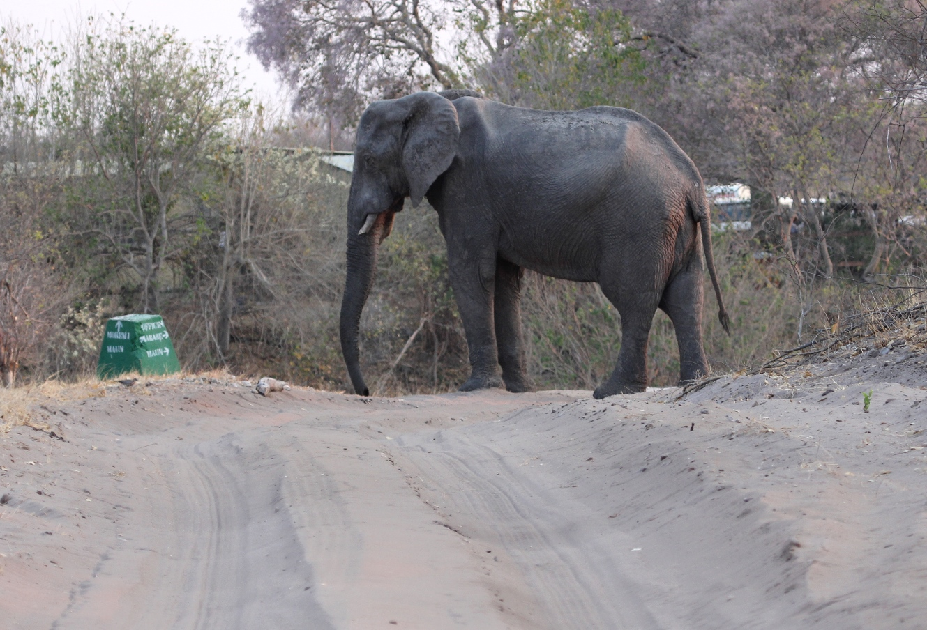 Cars, machinery, and other low-frequency human noise may impede elephant seismic communication.