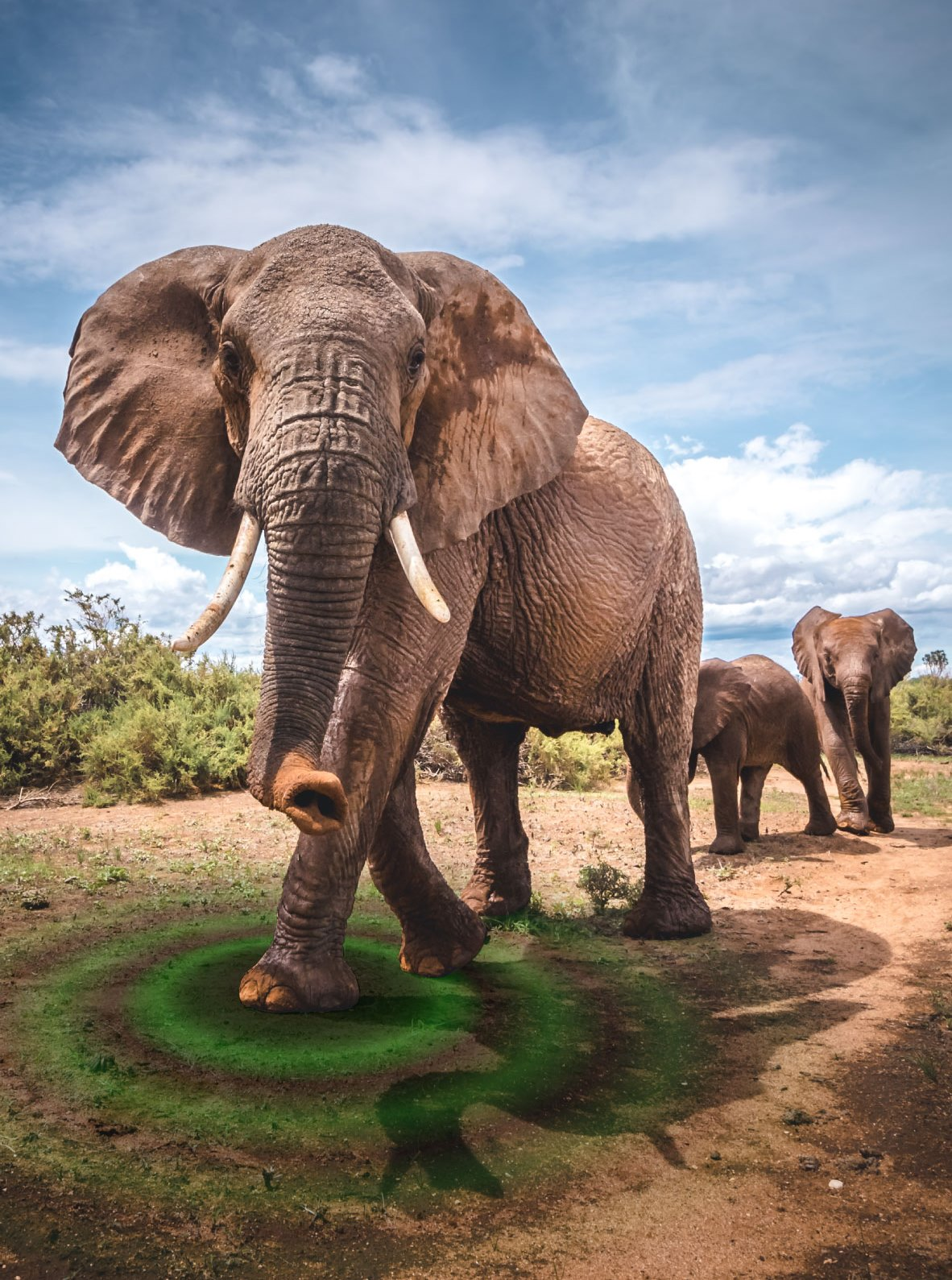 The study found that vibrations generated by low-frequency rumbles were generally stronger than those produced by vibrations from walking. The researchers hope to eventually be able to use seismic vibration patterns to remotely determine elephant behavior.