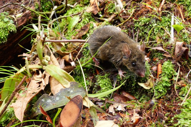 How an island of mice is changing what we know about evolution