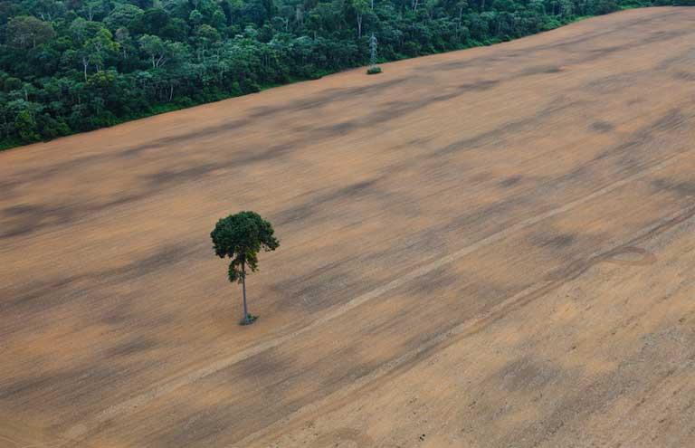Única árvore em uma plantação de soja próxima à floresta, ao sul da cidade de Santarém, ao longo da BR-163. Rodovias como essa, que corta a Amazônia por 1.700 quilômetros, permitem acesso à floresta e possibilitam novos focos de desmatamento. Imagem de Daniel Beltrà/Greenpeace