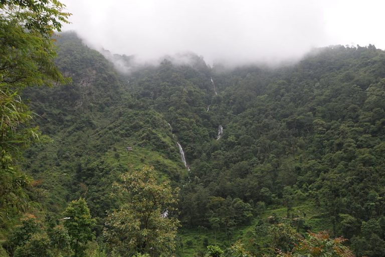 Trio of studies challenges Indian government claim of increasing forest cover