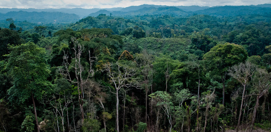 Forest in the Republic of Congo, such as this one along a newly constructed highway, is home to a large suite of animals threatened by trafficking and habitat loss.