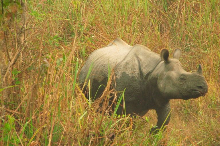 Guardians of India's rhinos find it takes a village to fight poachers