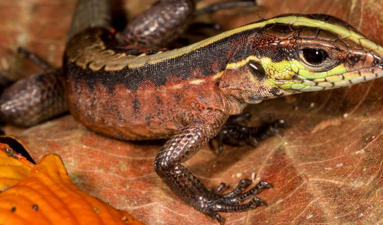 Bolivia's Madidi National Park home to world's largest array of land life, survey finds