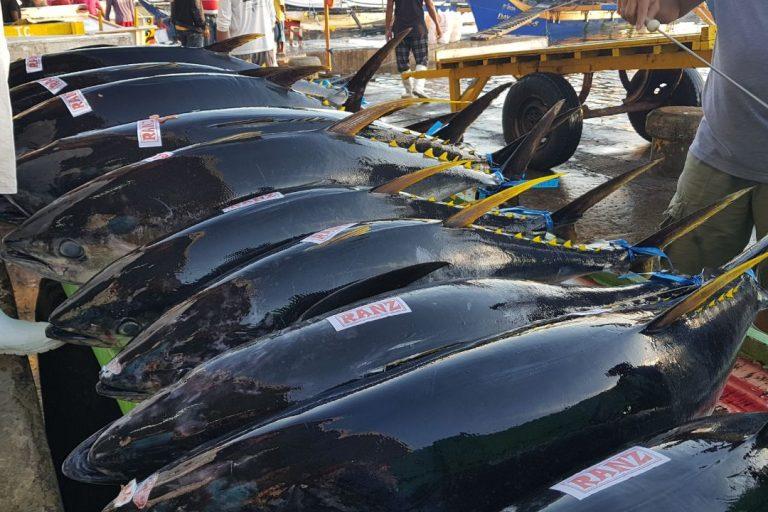 Tuna at market