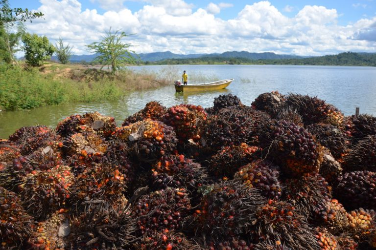How Colombia became Latin America's palm oil powerhouse