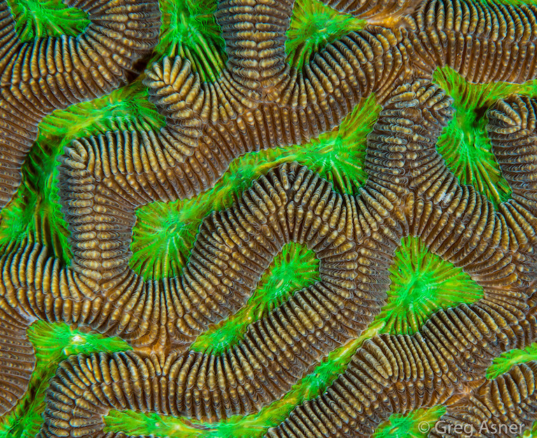 Coral polyps south of the Dominican Republic. Image by Greg Asner/Divephoto.org.