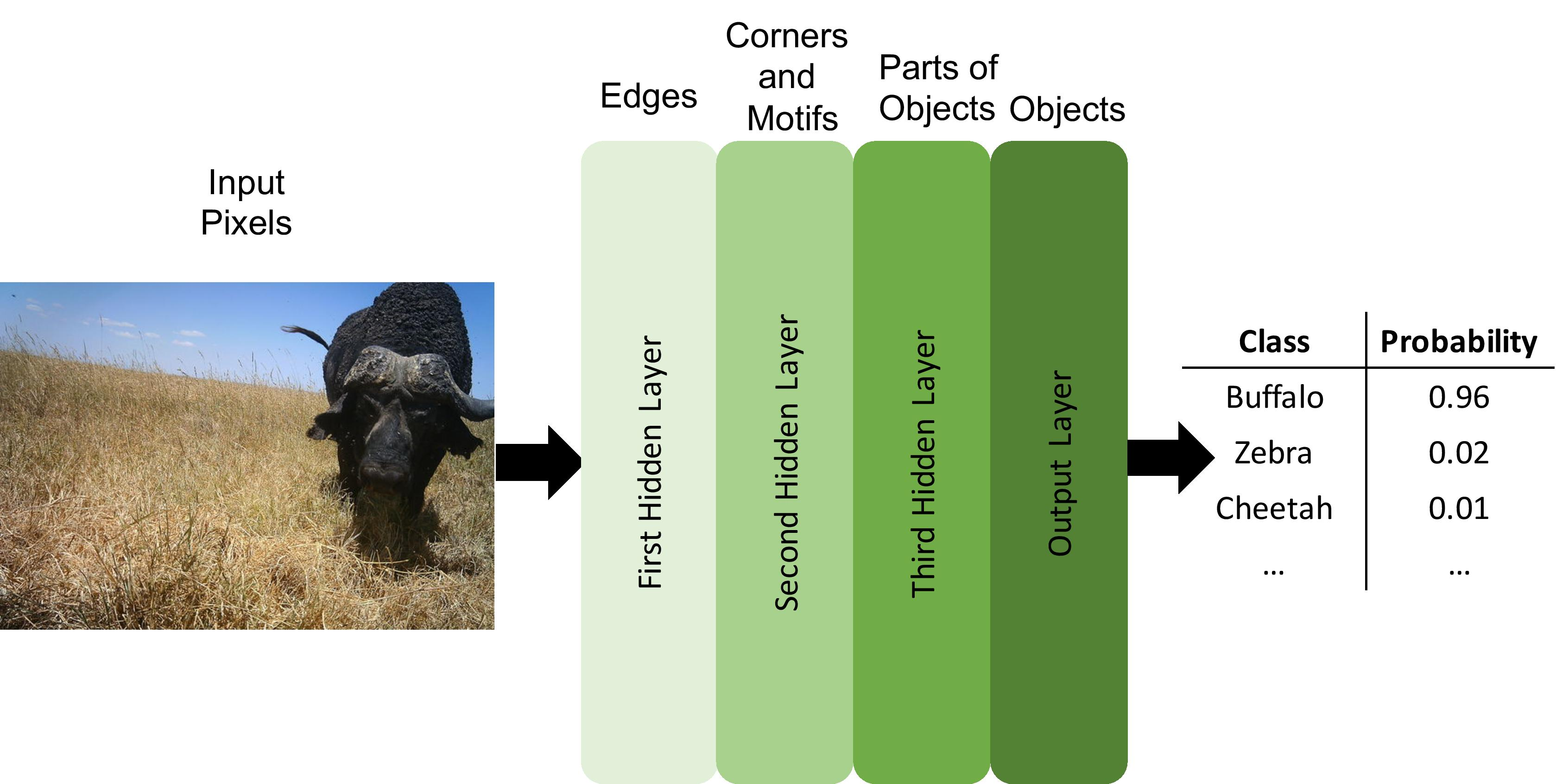 Neural networks recognize numerical patterns. Deep neural networks have several layers of abstraction that tend to gradually convert raw data into more abstract concepts. For example, raw pixels at the input layer are first processed to detect edges (first hidden layer), then corners and textures (second hidden layer), then object parts (third hidden layer), and so on if there are more layers, until a final prediction is made by the output layer. The types of features learned at each layer are not human-specified, but emerge automatically as the network learns how to solve a given task.