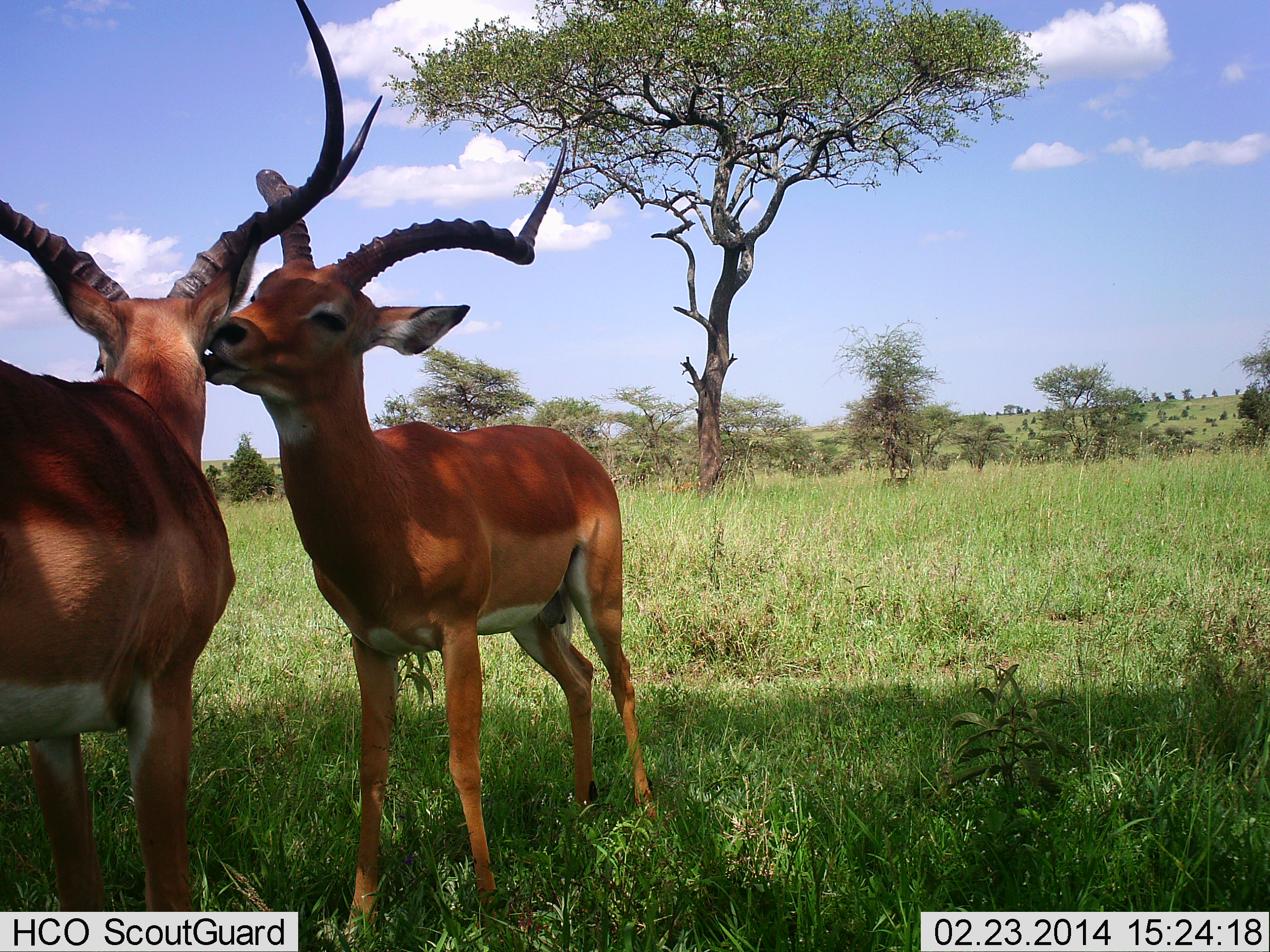 Motion Sensor Camera Traps Unobtrusively Take Pictures Of Animals In Their