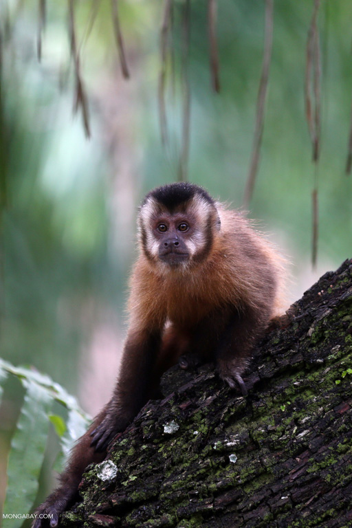 Primate-rich countries are becoming less hospitable places