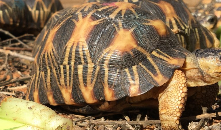 One tortoise at a time: Q&A with zoo veterinarian Justin Rosenberg