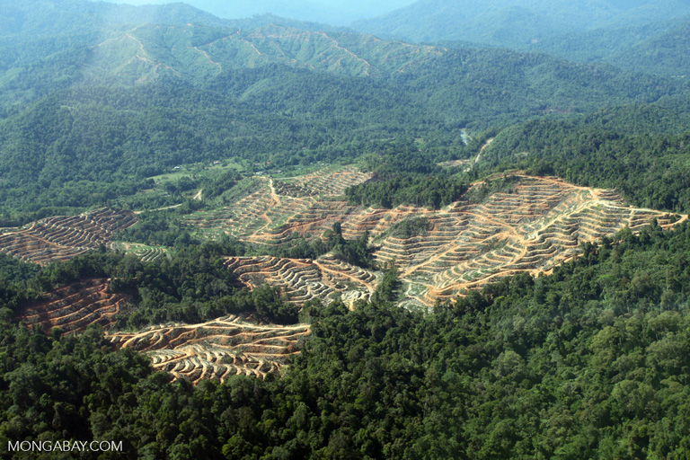 Conversion of rainforest for oil palm in Sabah, Malaysia. Photo by Rhett A. Butler.