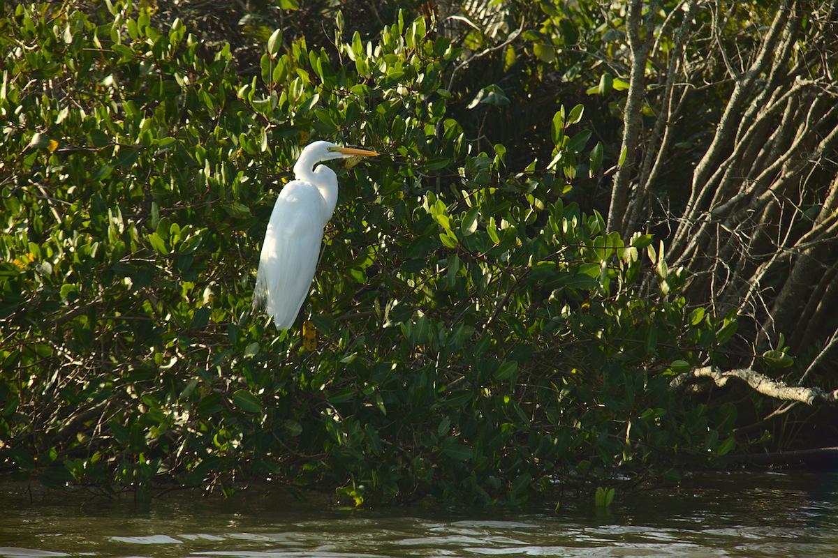 Brazils Mangroves