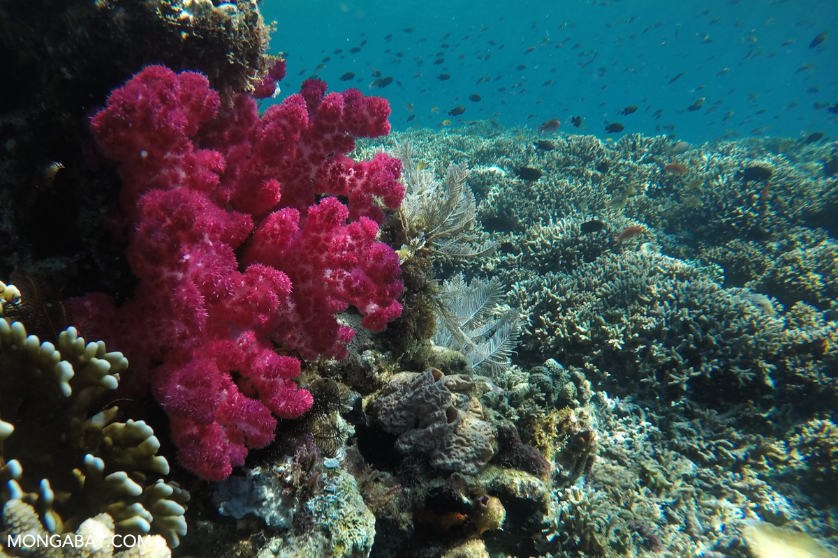 d9ae7f23173b Coral reef  oases  that thrive amid threats give hope for conservation