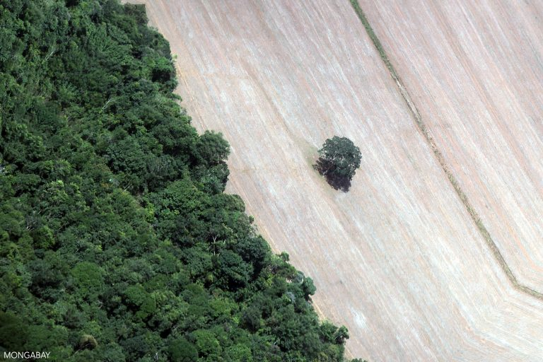 A lone Brazil nut tree left standing in a deforested area. Image by Rhett A. Butler/Mongabay.