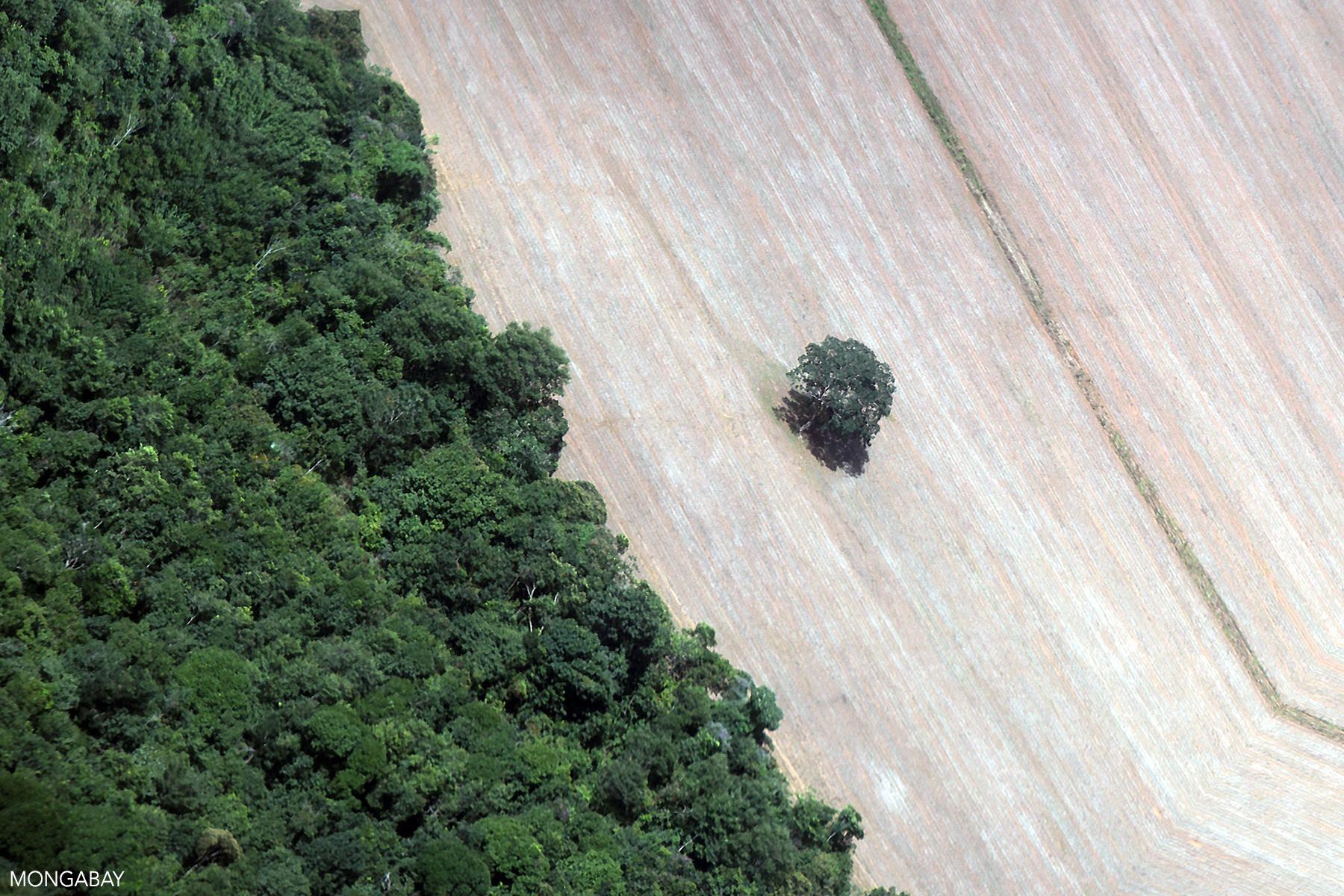 Déforestation pour l'élevage de bétail en Amazonie brésilienne. Photo de Rhett A. Butler pour Mongabay.