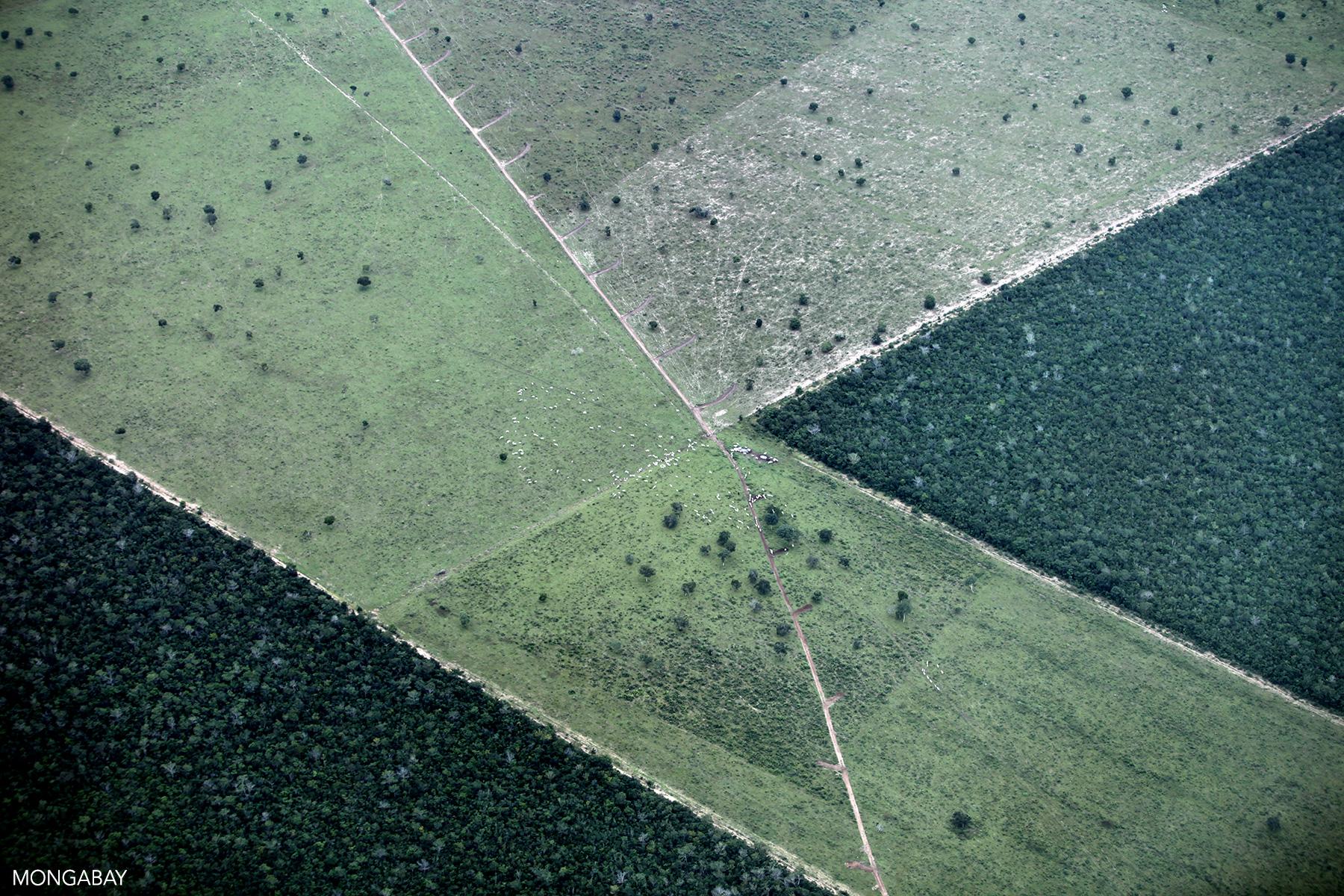 Deforestation for cattle ranching in the Brazilian Amazon. Photo by Rhett A. Butler for Mongabay.