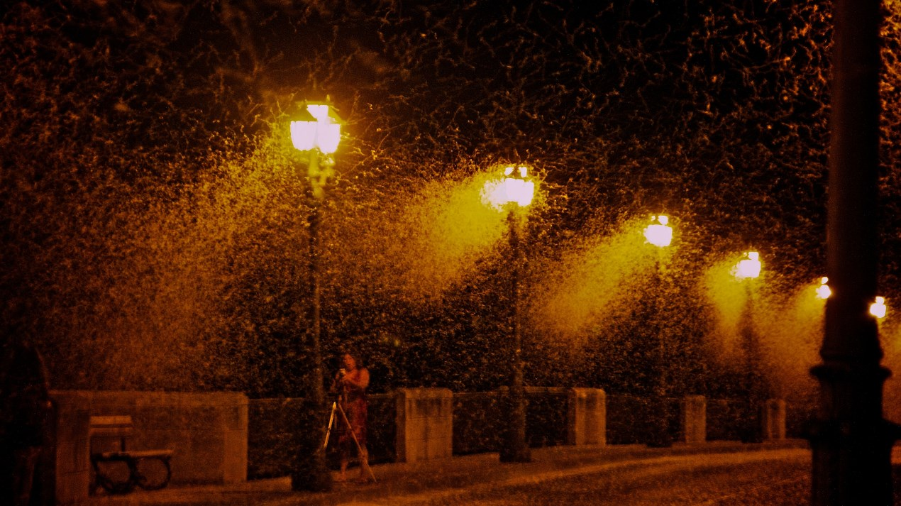 Hundreds of thousands of mayflies, winged aquatic insects in the order Ephemeroptera, attracted to the lights on a bridge over Spain's Rio Ebro. Sensitivity to reflected light that can indicate water, mayflies can be fooled and then trapped by artificial lights.