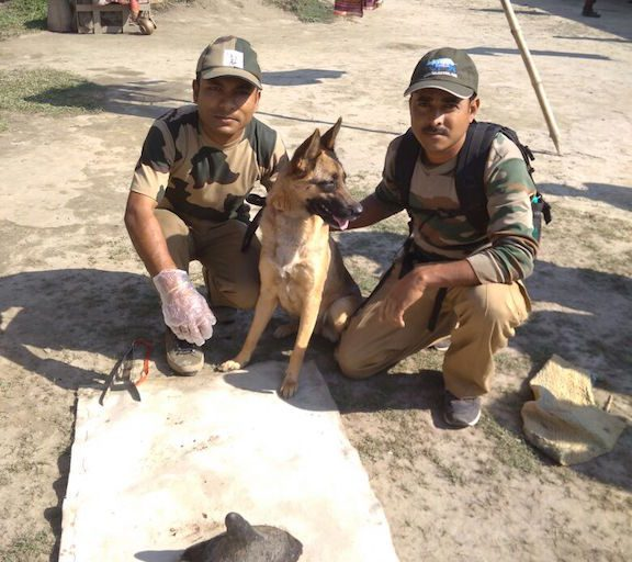 Quarmy, part of the Super Sniffer squad, and her handlers with a rhino horn the dog helped to recover. Photo credit: Assam Forest Department.