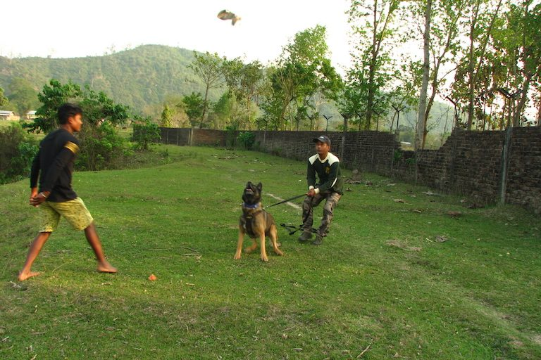 Zorba and his handlers on a tracking drill. Photo credit: Moushumi Basu/Mongabay