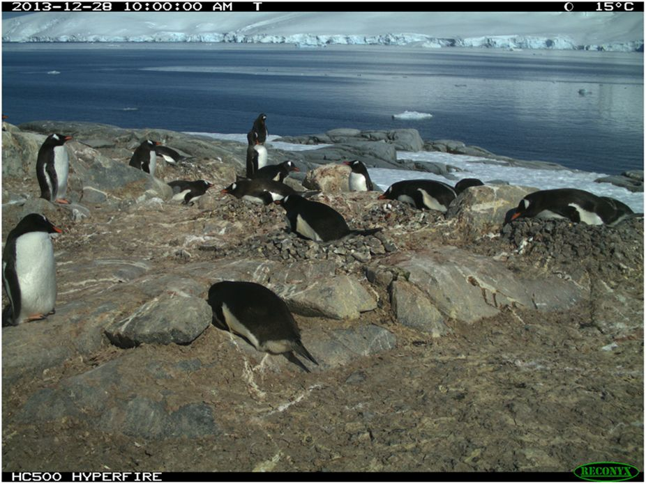 This image taken by a time-lapse camera at Damoy Point, Weincke Island, Antarctic Peninsula (64.82° S, 63.49° W) is one of the nearly 74,000 images used in the study. The photo's date, time, moon phase and temperature information are shown at the top of the image.
